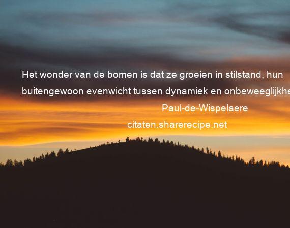 Citaten Filosofie Jawa : Paul de wispelaere het wonder van bomen is dat ze